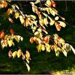 秋色見つけた・・・。