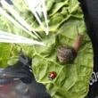 カタツムリとてんとう虫