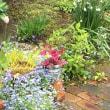 降り止まぬ雨の庭