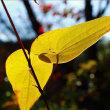 ◆霜降りる秋 (^O^)/~~~♪