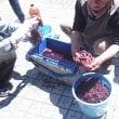 山葡萄で染める・草木染めワークショップ