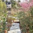 3月18日 庭階段作り