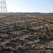 弾丸暗渠排水を施してから麦の播種。