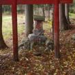 福島県南会津町、大桃駒嶽神社のハルニレです!!