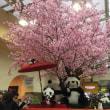 獺祭を  飲んでるパンダ  上野駅
