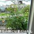 釧路は台風通過中…ダリアが~