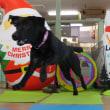【ALOHA塾】チョークアートぷちレッスン♪開催しました(*^-^*)  犬のしつけ教室@アロハドギー
