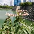 台風一過の藤田邸跡公園と大阪城