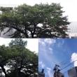 9月11日(火)今日の北川桜