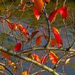 『季節の風景』 花水川岸