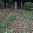 樹林地作業(0809)