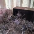 ジャンガリアンハムスターを飼い始めました!