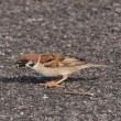 繁殖期の野鳥たち