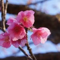西伊豆は春でした
