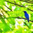公園の夏鳥