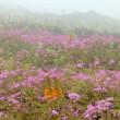 涼を求めて 雲上のお花畑へ