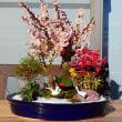 梅のお花が咲きました・・・綺麗なお花と香りにうっとり   布製、帯締め入れ・帯締めケース「優舞美」