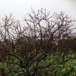 【大雪山国立公園・旭岳紅葉情報】台風18号の去った後