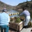 【2016】円良田湖(寄居町) 諏訪湖産ワカサギ卵を さらに400万粒放流!!