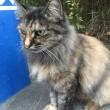 河原の野良猫 カブキちゃん