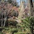 目白庭園からスタートする一日 ・・・ starting a day from Mejiro Garden