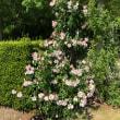 Rose Fairies Land