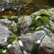 川と石と、苔と木と・・・