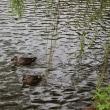 雨の三ッ池公園