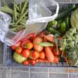 今日の収穫 キャベツ ブロッコリー キュウリ ピーマン インゲン トマト ニンジン