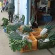 農研、茄子・ピーマン収穫、秋冬野菜の管理と収穫