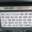ハーブ庭園旅日記 2017.8.17