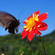 過去の写真~秋の花風景 ダリア 9