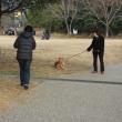 岡崎南公園梅まつり