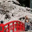 東北地方全県で桜咲く