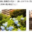 堀切菖蒲園(H30.6.16)