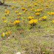 花彩々   黄色い花