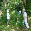 レイカディア大学の選択学科「樹木の剪定」