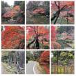 成田山公園紅葉02