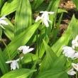 「都立薬草植物園の季節の花々の写真」