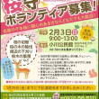 本匠岩屋の千本桜「桜守」ボランティア募集!