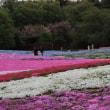東部トレジャーガーデンの芝桜2018
