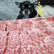 我が家の豪華晩酌メニュー&ひたすら飼い主を信じ待ち続けた犬&西内まりや社長ビンタ事件