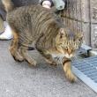 のだふじ巡りで会った猫