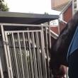 馬にお水を飲ませる