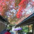 京都洛西きもので紅葉狩り