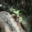 英彦山…尾根を登って、滝を巡り、川を下ってきました…