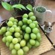 旬の葡萄や旅のお土産