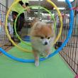 幼稚園体験にきてくれた【空くん】(*^-^*)  犬のしつけ教室@アロハドギー