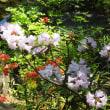 春の和花Ⅲ ダイコンソウ、ツボサンゴ、シライトソウ、タイワンクマガイソウ