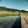 【京都•亀岡市】2018年6月10日(日)椿と水琴窟の寺「真福寺」Attune 開催します。